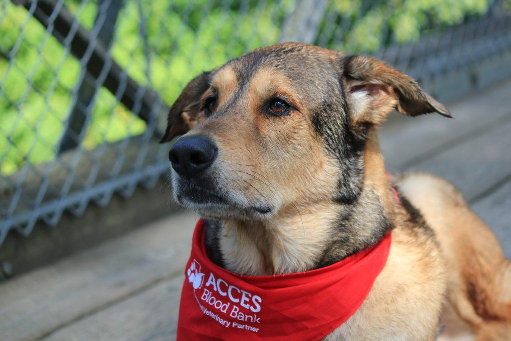 Community Pet Blood Bank, Acces blood bank, blue pearl vet, hero pets