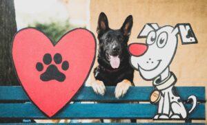 six, auburn examiner dog, service dog Six, 6 AE, AE mascot, elizabeth miller service dog