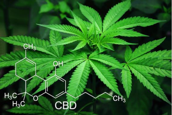 cbd, what is cbd, cbd science, marijuana leaf, marijuana, cannabis
