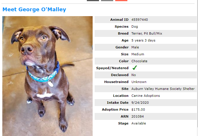 avhs, auburn valley humane society, adoptions, shelter open house, george omalley, dog adoption auburn wa, auburn humane society, auburn animal shelter