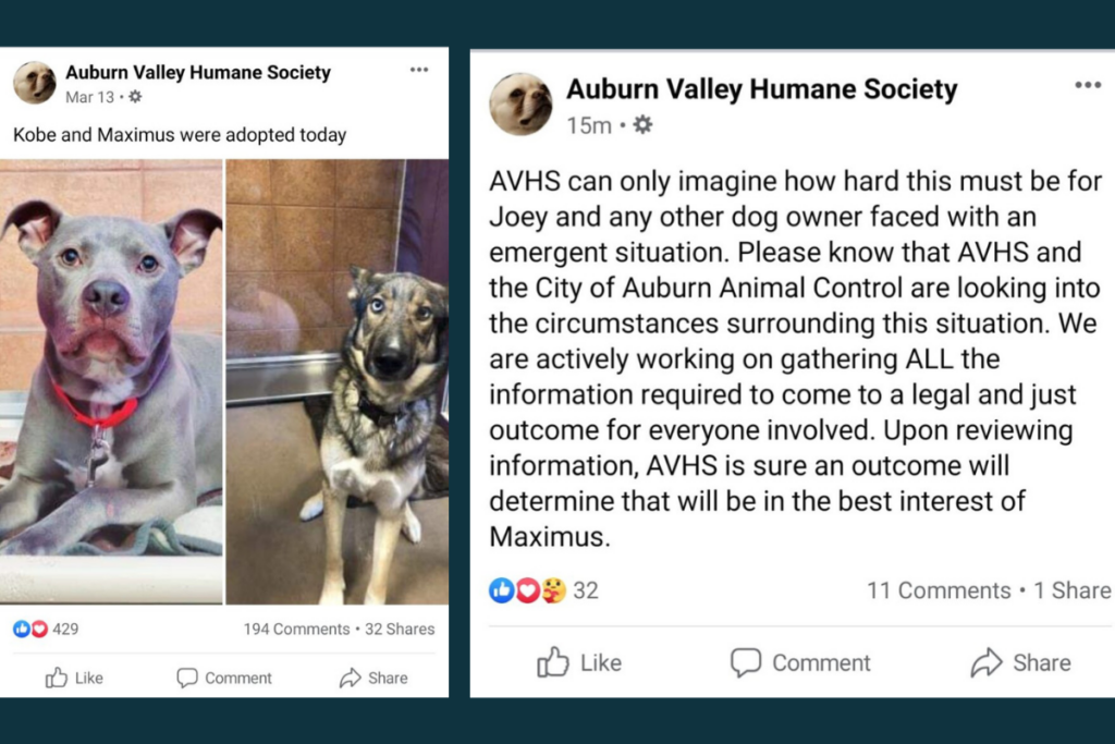 Two screen grabs from the AVHS Facebook page, one announcing 'Maximus' was adopted on March 13, and the second of a A March 28 post from the AVHS addressing Joey and Max.