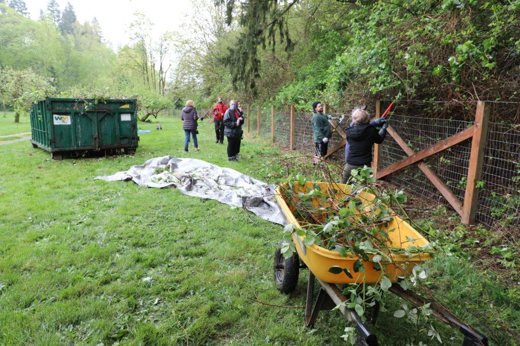 Volunteers trim vegetation during Auburn's Clean Sweep 2021